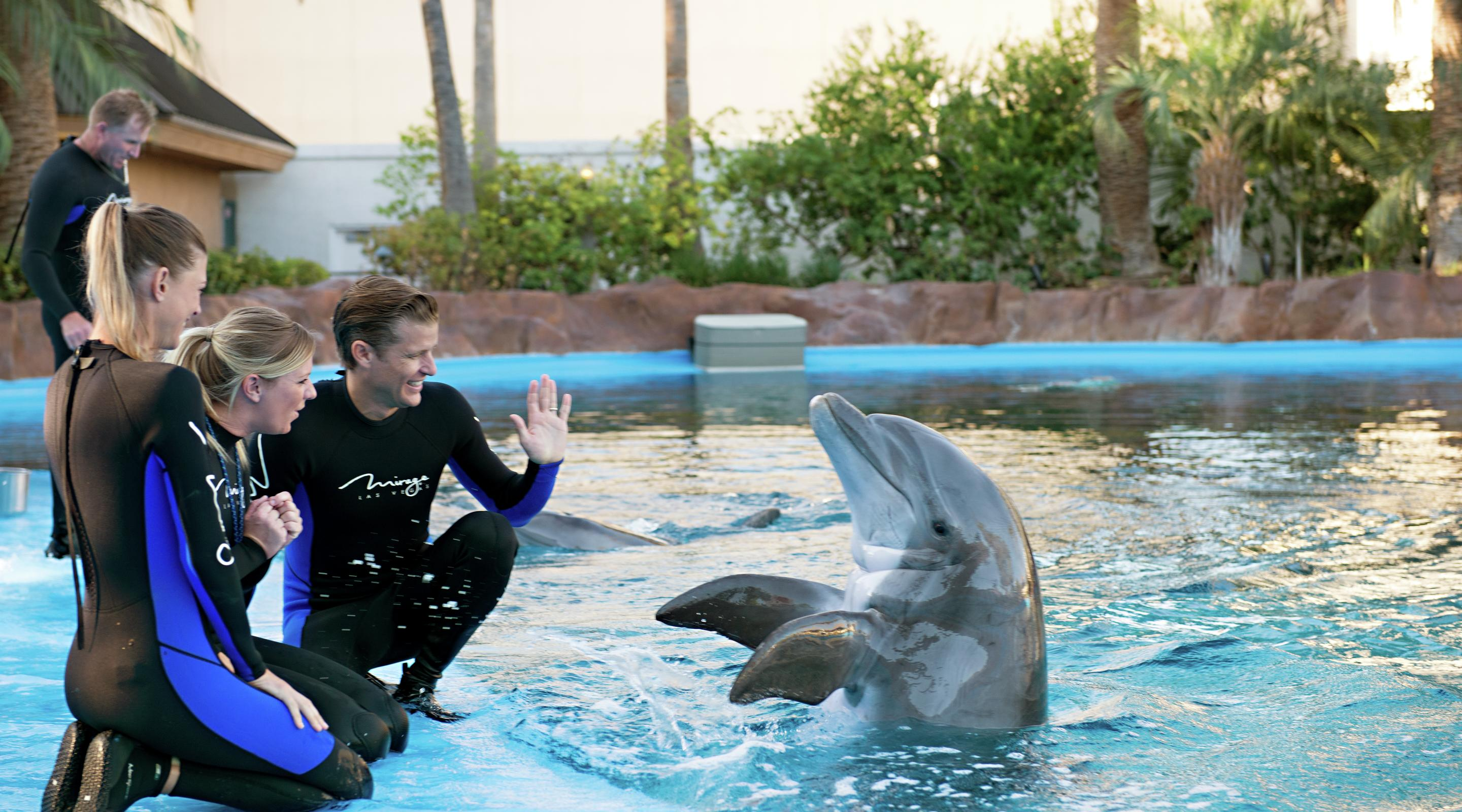 Siegfried Roy 39 S Secret Garden And Dolphin Habitat The Mirage