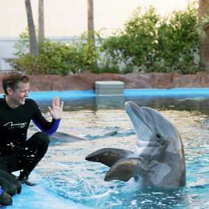 mirage-secret-garden-dolphin-habitat-trainer-waving.tif.image.300.300.high